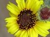 CIMG6381 (kazadmanesh) Tags: و بهار خشکسالی