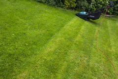 2014wk22_This is my.... (Damien Walmsley) Tags: grass lines moss cut stripes lawn lawnmower clover 52 cutgrass greengreengrassofhome thisismy 52weeks