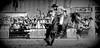 Bien tranquilito (Eduardo Amorim) Tags: horses horse southamerica caballo uruguay cheval caballos cavalos prado montevideo pferde cavalli cavallo cavalo gauchos pferd hest hevonen chevaux gaucho 馬 américadosul montevidéu häst uruguai gaúcho 말 amériquedusud лошадь gaúchos 马 sudamérica suramérica américadelsur סוס südamerika jineteada حصان άλογο umbeijo americadelsud gineteada ม้า americameridionale semanacriolla semanacriolladelprado eduardoamorim ঘোড়া boanoiteebonssonhosqueridoamigo