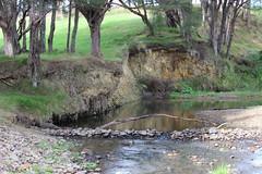 Waharau Regional Park, Auckland (ImagineIT Photography) Tags: park newzealand mountain river stream stones hills auckland northisland regionalpark hunua kaiaua waharau