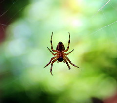 Garden spider (tim.hage) Tags: macro animal insect spider outdoor web