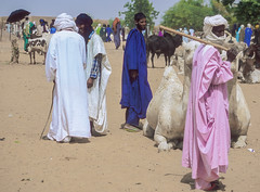 Mali : Gossi #14 (foto_morgana) Tags: africa cattle market dromedary afrika mali nikoncoolscan analogphotography tuareg afrique draught analogefotografie vuescan gossi photographieanalogue
