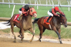 2013-09-19 (249) r9 Julian Pimentel on #1 Denver Duel (JLeeFleenor) Tags: photos photography laurelpark marylandracing marylandhorseracing md jockey   jinete  dokej jocheu  jquei okej kilparatsastaja rennreiter fantino    jokey ngi horses thoroughbreds equine equestrian cheval cavalo cavallo cavall caballo pferd paard perd hevonen hest hestur cal kon konj beygir capall ceffyl cuddy yarraman faras alogo soos kuda uma pfeerd koin    hst     ko  julianpimentel maryland