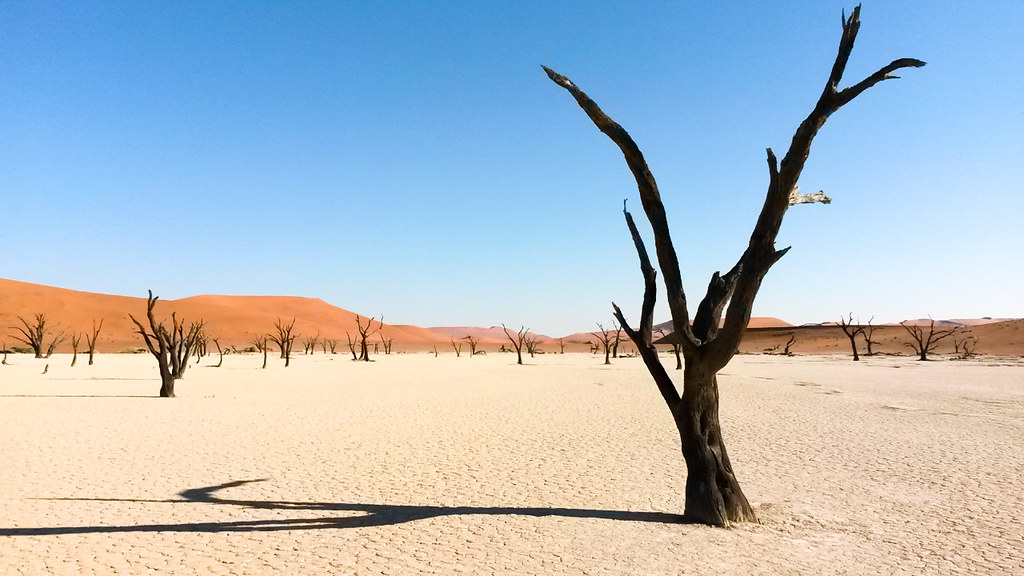 The Trees in Dead Vlei, Namibia
