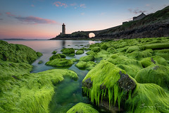 Green ... Minou lighthouse (Rouz 29) Tags: longexposure bridge sunset sea lighthouse seascape france green beach nature wet rose architecture landscape nikon brittany coucher bretagne vert breizh reflet lee brest 29 nikkor nuage paysage crpuscule plage phare rocher couleur coucherdesoleil rochers breton nisi bzh finistre galets 1635 couchersoleil galet d610 rouz wetrock rade algue wetrocks poselongue iroise nd1000 radedebrest petitminou phareduminou nikkor1635 erwanleroux rocherhumide rochershumides nikond610 nisifstop