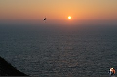 2014-04 Algarve     Portugal (creationtao) Tags: sunset sea bird portugal soleil coucher ciel algarve mouette
