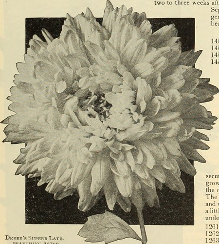 "Image from page 58 of ""Dreer's garden book 1915"" (1915)"