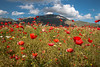 Poppies everywhere (luigig75) Tags: italy snow mountains field clouds canon italia poppies campo umbria 1022 monti papaveri norcia piana castelluccio sibillini vettore 70d