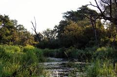 Pondscape (H McCann) Tags: africa park travel wild green nature river landscape southafrica pond natural south sa krugernationalpark wetland kruger sanparks uploaded:by=flickrmobile flickriosapp:filter=nofilter