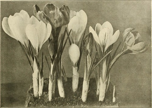 """Image from page 27 of """"Farquhar's autumn catalogue : 1913"""" (1913)"""