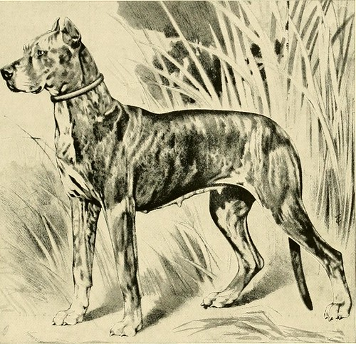 "Image from page 114 of ""The new book of the dog : a comprehensive natural history of British dogs and their foreign relatives, with chapters on law, breeding, kennel management, and veterinary treatment"" (1911)"