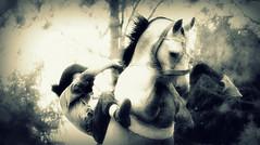 Bem perto do cu (Eduardo Amorim) Tags: brazil horses horse southamerica brasil caballo cheval caballos cavalos pelotas pferde cavalli cavallo cavalo gauchos pferd pampa hest hevonen campanha brsil chevaux gaucho  amricadosul hst gacho  campero amriquedusud  gachos  sudamrica suramrica amricadelsur  sdamerika jineteada   camperos americadelsud gineteada  americameridionale campeiros campeiro eduardoamorim