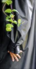 (klep-o-holic) Tags: shiny rubber mackintosh rillo kleppermantel