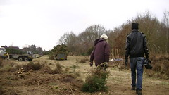 Taking gorse to be burnt