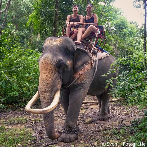 In de jungle op Ko Dan