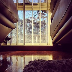 instagrammed (raqib) Tags: morning winter sky tree window valencia square lounge sunny sofa squareformat bleak baretree sunnyday throughthewindow winterafternoon nakedtree timberfloor iphoneography instagram instagramapp uploaded:by=instagram instagrammed