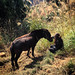 Girl and Donkey - Longji Rice Terraces - Guangxi, China