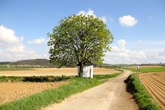 Zuid Limburg (ToJoLa) Tags: canon canoneos60d voorjaar lente spring zuidlimburg limburg zon wandeling ontrack kleuren landschap landscape uitzicht bloem heuvelland kapel tree boom bloesem