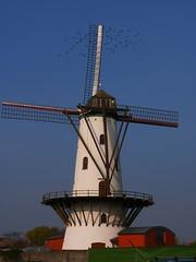 Hostensmolen à Ruiselede (Rudy Pické) Tags: belgique flandres ruiselede
