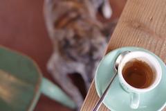 espresso (dog's age) Tags: demitasse stain espresso caffè cafe coffee kaffee dog akitainu mixbreed caffenero tokyo japan