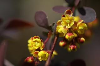 Sarı çiçek - Yellow flower