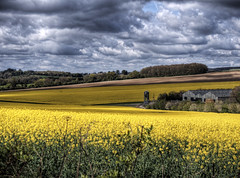 Canola near winchester (neilalderney123) Tags: ©2017neilhoward canola rapeseed rural farm winchester olympus crop yellow hayfever pollen