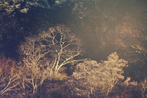 Spring Bonsai (Appalachian Hiker) Tags: