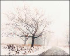 foggy tree (-liyen-) Tags: tree fog road foggy landscape daytime fujixt1 explore winter matchpointwinner mpt536