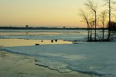 looking downriver (thomas.erskine) Tags: 20170330imgp2948teelevrotunsh 2017 mar winter dawn ottawa river skyline ice