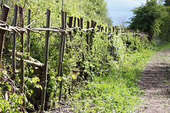 ...the old fence... HFF (maf863) Tags: fence happyfencefriday wood canon700d canon 700d path hedge