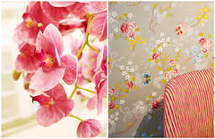 To live happily is an inward power of the soul. (mintukka) Tags: chair diptych flowers decor decoration colors wallpaper spring orchid pink interior dippy stilllife detail