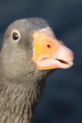 253 (AO'Brien) Tags: arklow wicklow autumn birds