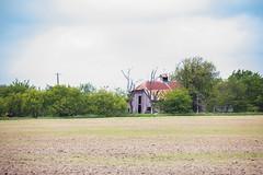 German Settler's Barn (Ollie girl) Tags: barn settler texas pilot point pilotpoint spring landscape greengrass horses