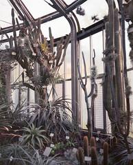 Kakteenhaus (nikolaijan) Tags: plaubelmakina 67 plaubel kodak portra800 120 berlin botanical garden film