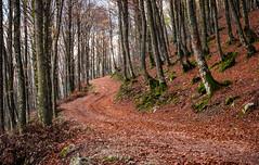 Sentiero (SDB79) Tags: sentiero foliage foglie bosco parco natura paesaggio molise pizzone parconazionaleabruzzo escursione trekking passeggiata alberi