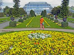 Botanischer Garten Berlin (magritknapp) Tags: stiefmütterchen rondell mit grosem tropenhaus pansy with large tropical house avec une grande maison tropicale con una gran casa