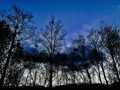 Copse (The Big Jiggety) Tags: arbre arbol baum himmel ciel cielo nature naturaleza forest foret bosque bois woods wald infinitexposure