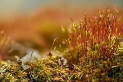 Simply Moss
