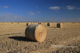 near Tailem Bend, hay rolls - Explore