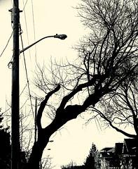 Urbanscape 3 # 36 ... ; (c)rebfoto (rebfoto) Tags: tree urbanscape cityscape blackandwhite rebfoto silhouette lamppost city
