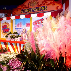 Popcorn and cotton candy (yooperann) Tags: macysflowershow macys chicago flower show indoor carnival theme