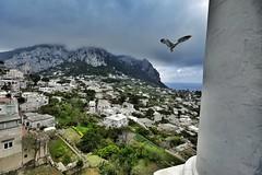 Capri ♡ (paola ambrosecchia) Tags: capri bird flying freedom italia naples italy beautiful sky city landscape amazing clouds summer nature sea magical
