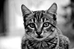 Street cat (elka.) Tags: cat kitten kot katte neko chat gata katze kotek cats kitty katt кошка γάτα γάτεσ кошки feline котка animal outdoor greece korynt corinth