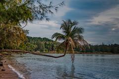 Palme - Palm Tree Koh Phangan Thailand (Jutta M. Jenning) Tags: insel kohphangan thailand palmen asien baden schwimmen meer relaxen urlaub ferien tourismus backpacker rucksackreisen reisen traumurlaub rucksacktourismus backpackerurlaub backpackerreisen reisebericht beach palm palms woktum