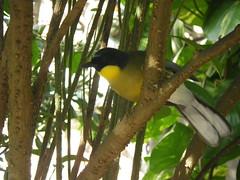 2016-12-28 Animal Kingdom - 92 (s.kosoris) Tags: skosoris pentaxoptiowg1 wg1 pentax animalkingdom disney disneysanimalkingdom florida bird birds