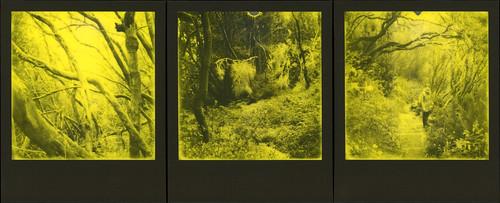 Parque nacional de Garajonay Triptych 2