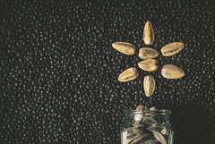 Seeds (Carrie McGann) Tags: seeds sunflowerseeds blackbelugalentils memberschoiceseeds macromondays macro 041717 nikon interesting