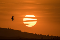 Kite in the sunset (Tim Melling) Tags: sunset kite ethiopia timmelling