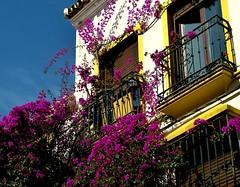 Fachada con buganvilla (camus agp) Tags: fachadas edificio balcones buganvillas españa primavera calle arquitectura