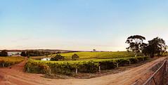 Anonymous Wineyard (dana.nikolova (india-eve)) Tags: wineyard wine winery adelaidehills adelaide southaustralia australia nature pano panorama stitched vines dirtroad bluesky fence clearsky dusk country countrylife landscape countrylandscape wideangle canon 6d